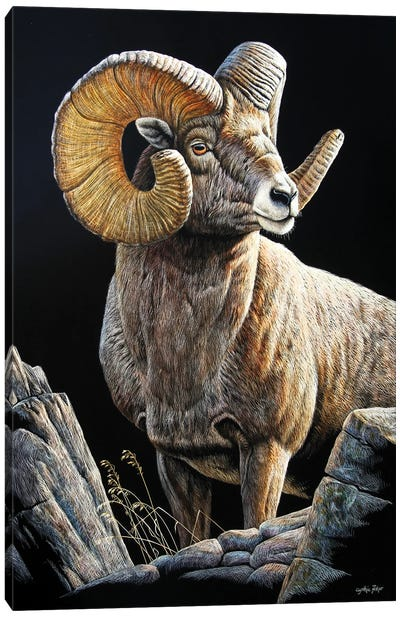 Bighorn Sb Canvas Art Print