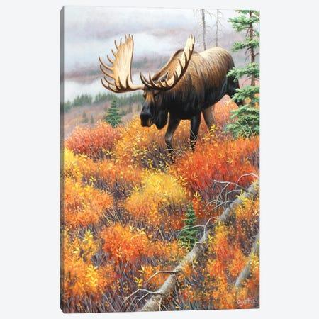 Moose Walking Dh Canvas Print #CYT142} by Cynthie Fisher Art Print