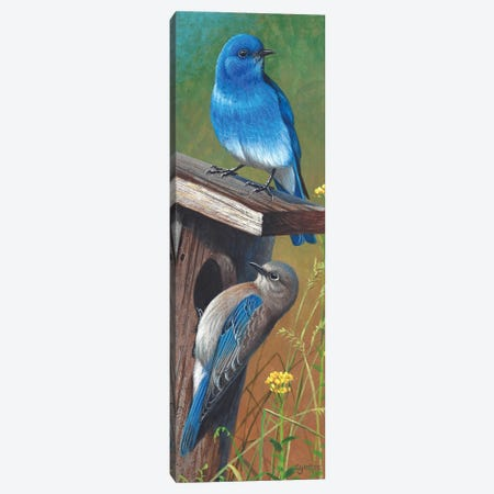 Mountain Bluebirds Canvas Print #CYT143} by Cynthie Fisher Canvas Print