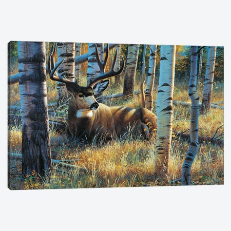Mule Deer Seista Canvas Print #CYT144} by Cynthie Fisher Canvas Artwork