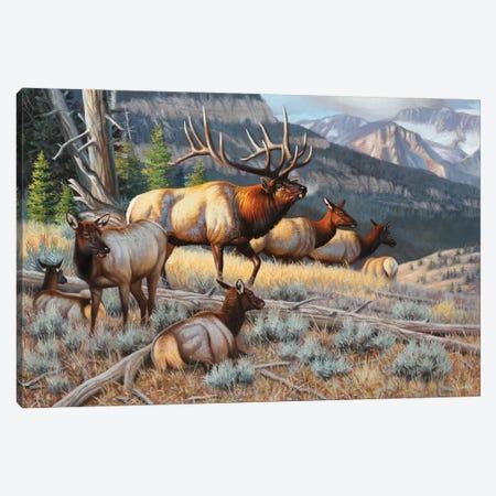 New Elk Canvas Print #CYT149} by Cynthie Fisher Canvas Art Print