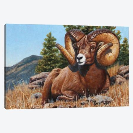 Bighorn Sheep Quick Draw Canvas Print #CYT14} by Cynthie Fisher Canvas Wall Art