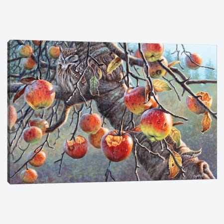 Owl And Apples Canvas Print #CYT150} by Cynthie Fisher Canvas Artwork