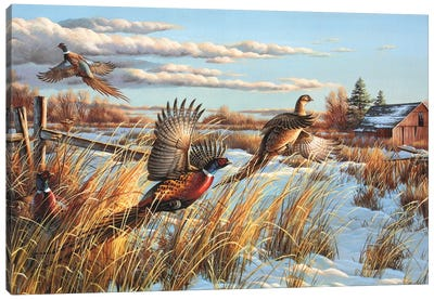 Pheasants Farm Canvas Art Print