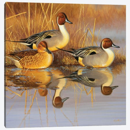 Pintail Oil Canvas Print #CYT152} by Cynthie Fisher Canvas Art