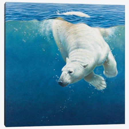 Polar Bear Canvas Print #CYT154} by Cynthie Fisher Canvas Print