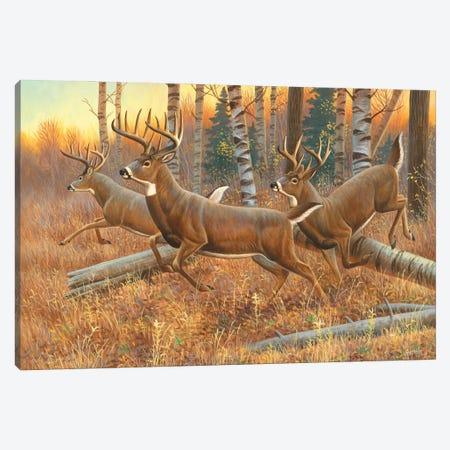 Running Bucks Canvas Print #CYT163} by Cynthie Fisher Art Print