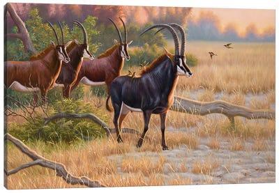 Sables At Sunrise Canvas Art Print