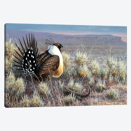 Sage Grouse Canvas Print #CYT166} by Cynthie Fisher Canvas Artwork