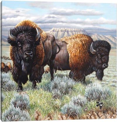 Bison Finish Canvas Art Print