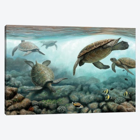 Sea Turtles Canvas Print #CYT171} by Cynthie Fisher Canvas Art