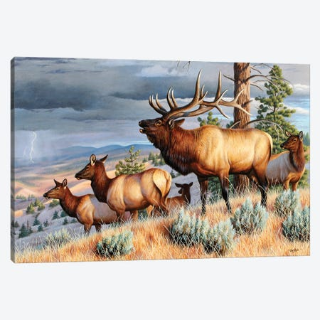 Storm Challenge Elk Canvas Print #CYT177} by Cynthie Fisher Canvas Art Print