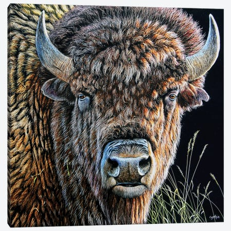 Bison Sb Canvas Print #CYT17} by Cynthie Fisher Canvas Artwork
