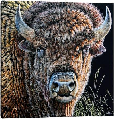 Bison Sb Canvas Art Print