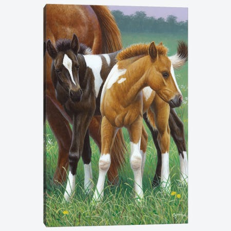 Two Foals Canvas Print #CYT191} by Cynthie Fisher Canvas Art