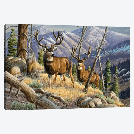 Two Mule Deer Bucks Canvas Print #CYT192} by Cynthie Fisher Canvas Art