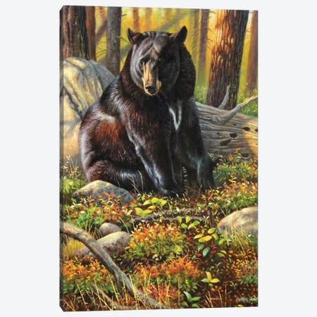 Black Bear Canvas Print #CYT19} by Cynthie Fisher Canvas Print