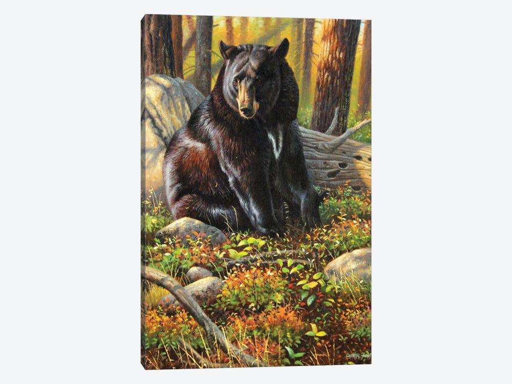 Black Bear by Cynthie Fisher 1-piece Canvas Art
