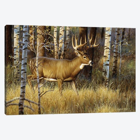 Whitetail Buck II Canvas Print #CYT200} by Cynthie Fisher Canvas Wall Art
