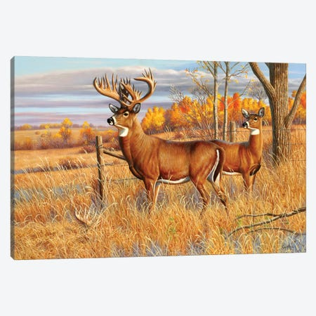 Whitetail Deer Buck Canvas Print #CYT202} by Cynthie Fisher Canvas Wall Art