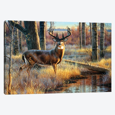 Whitetail Mossyhorns Canvas Print #CYT204} by Cynthie Fisher Canvas Art Print