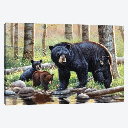 Black Bear With Cubs Canvas Print #CYT20} by Cynthie Fisher Canvas Wall Art