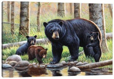 Black Bear With Cubs Canvas Art Print
