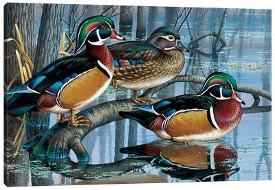 Wood Ducks Canvas Art Print