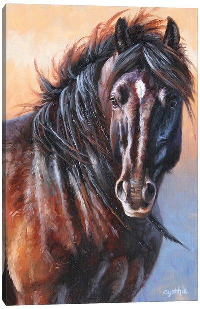 Black Stallion Canvas Art Print