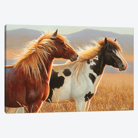 Young Stallions Copy Canvas Print #CYT220} by Cynthie Fisher Canvas Wall Art