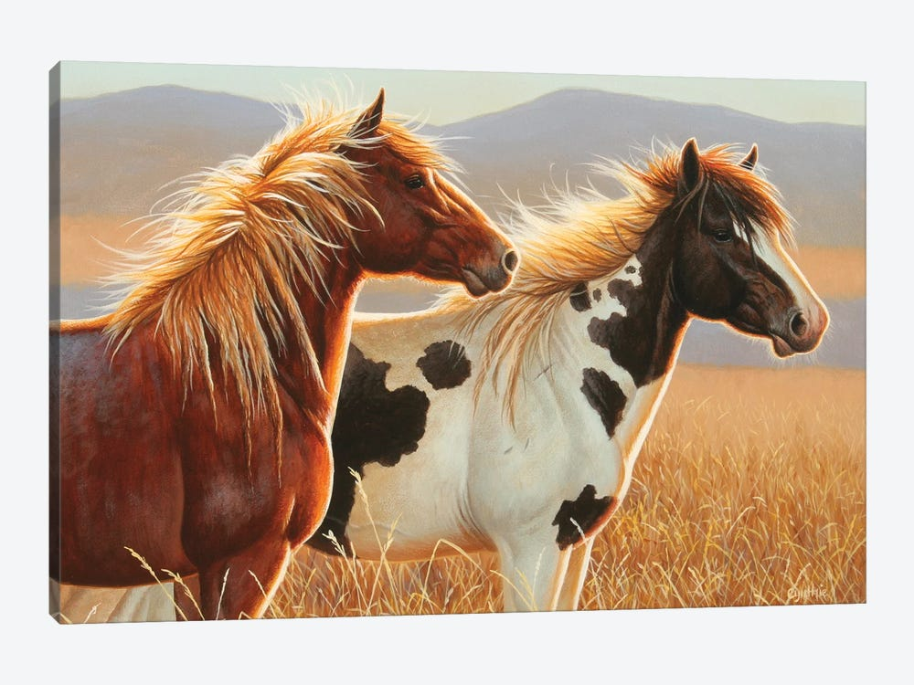 Young Stallions Copy by Cynthie Fisher 1-piece Canvas Art
