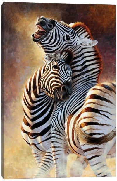 Zebra Courtship Canvas Art Print