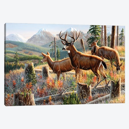 Blacktail Deer Canvas Print #CYT22} by Cynthie Fisher Canvas Art