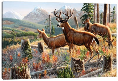 Blacktail Deer Canvas Art Print