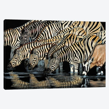 Zebras Drinking Canvas Print #CYT231} by Cynthie Fisher Art Print