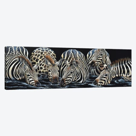 Zebras Drinking Scratch Canvas Print #CYT232} by Cynthie Fisher Art Print