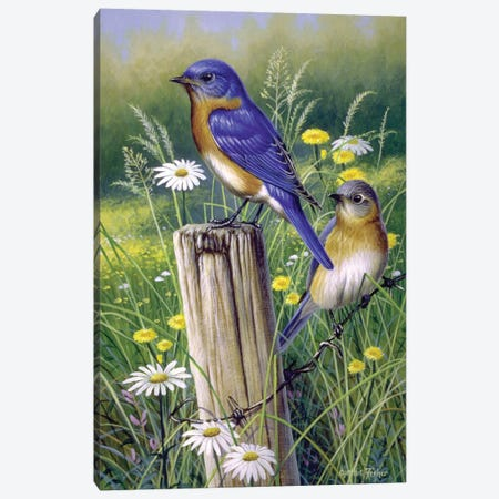 Bluebirds Canvas Print #CYT24} by Cynthie Fisher Art Print