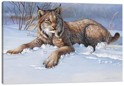 Bobcat Canvas Art Print
