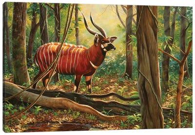 Bongo Canvas Art Print