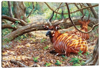 Bongos Canvas Art Print