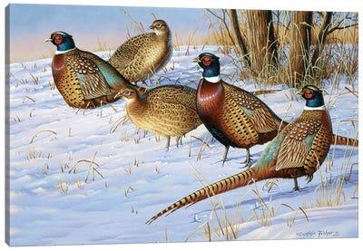 5 Pheasants In Snow Canvas Art Print
