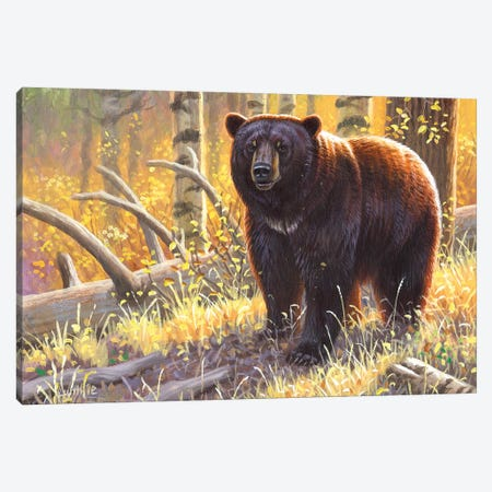 Brown Black Bear Canvas Print #CYT30} by Cynthie Fisher Canvas Art Print