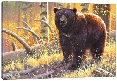 Brown Black Bear Canvas Art Print