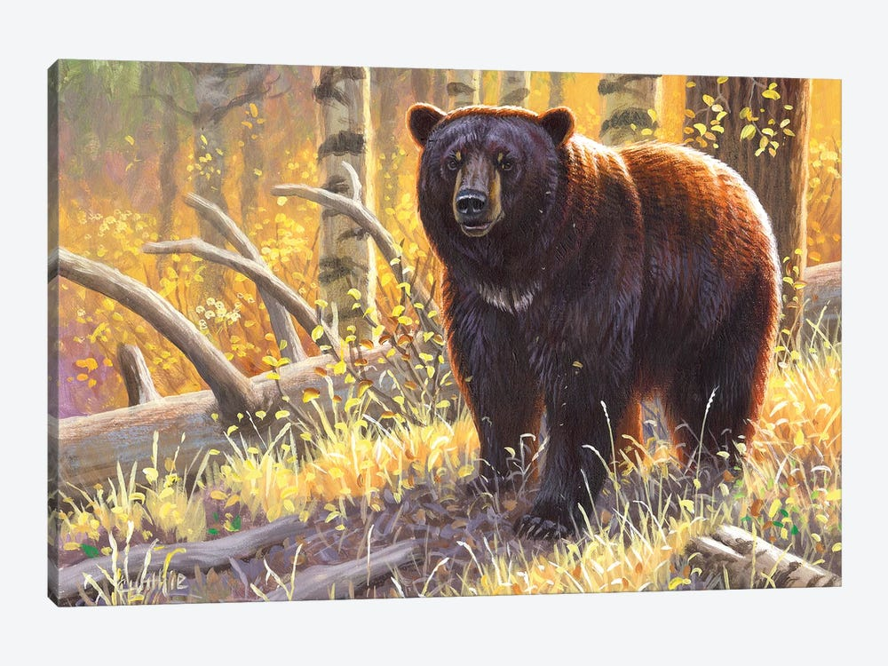 Brown Black Bear by Cynthie Fisher 1-piece Canvas Print