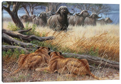 Buf And Lionesses Canvas Art Print