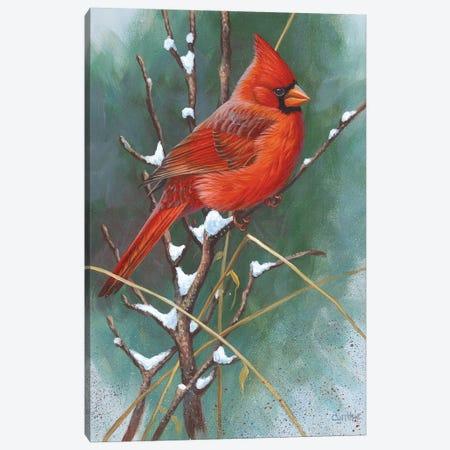 Cardinal Canvas Print #CYT35} by Cynthie Fisher Canvas Artwork