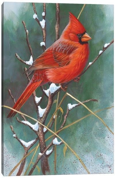 Cardinal Canvas Art Print