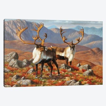 Caribou I Canvas Print #CYT38} by Cynthie Fisher Art Print