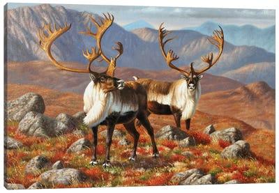 Caribou I Canvas Art Print