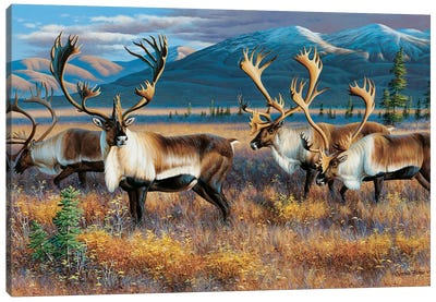Caribou III Canvas Art Print